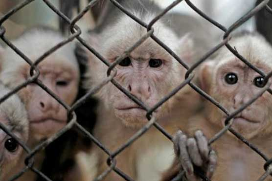 Monkey study dampens hopes for AIDS cure