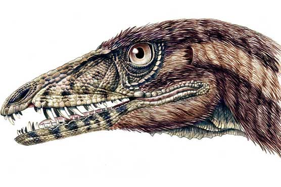 Study traces dinosaur evolution into early birds