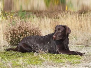 امریکا میں کتے نے اپنی مالکن کو گولی مار کرزخمی کردیا