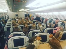 photo-of-80-birds-being-flown-on-jet-by-saudi-prince-goes-viral